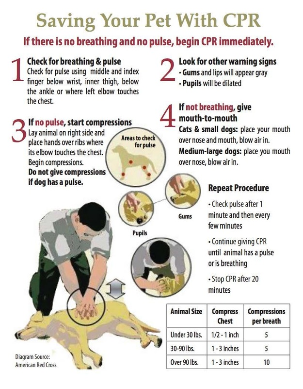 How To Preform Cpr For Pets Natural Pet Food Supply Seattle
