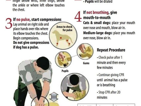 How to Preform CPR for Pets