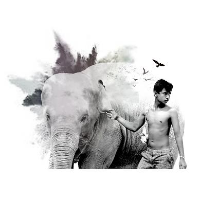 carte.hetre.craétion.éléphant.png