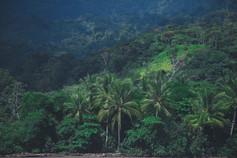 junglebabysmall.jpg