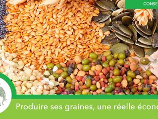 Économiser en produisant vos propres graines