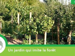 Un jardin qui imite la forêt !