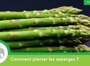Comment planter les asperges ?