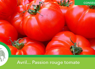 Passion rouge tomate !