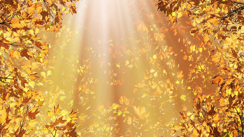 421940-download-background-fall-1920x108