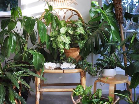 Plants + Crystals -  The Domestic Goddess Dream Team