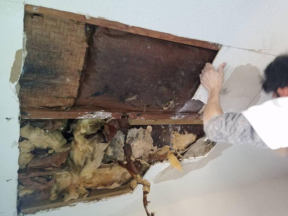 Carpentry and Repairs