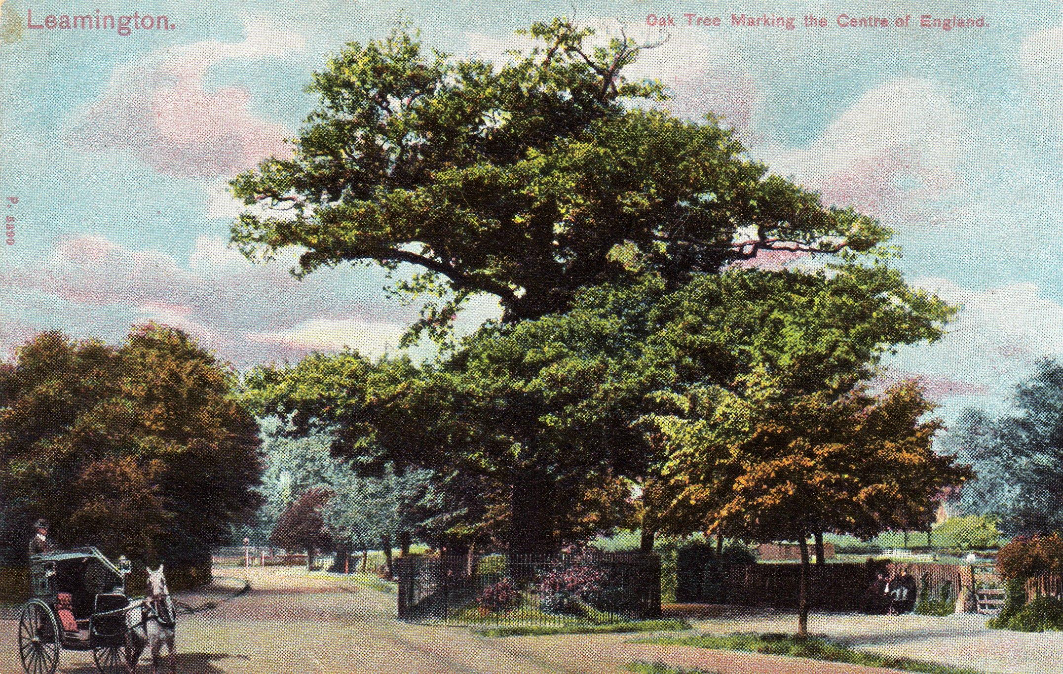 The Midland Oak
