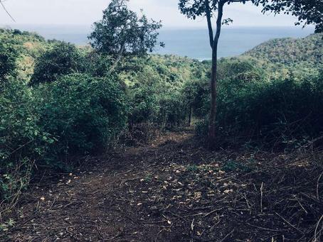 Ecuador Permaculture Project