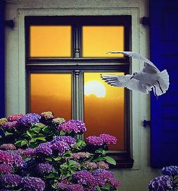 window-1843473_1920 editado.jpg