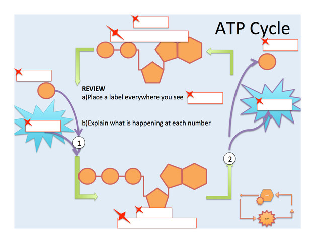 Printables Atp Worksheet photosynthesis atp and adp cycle bealsscience right click the image below to download worksheet fill it out as you watch youtube video chemical energy for cells an