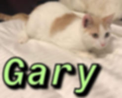 Gary 2.jpg
