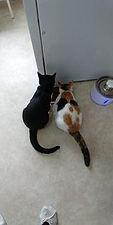Bonded kittens 4 Dec 2020.jpg