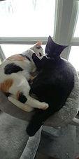 Bonded kittens 5 Dec 2020.jpg
