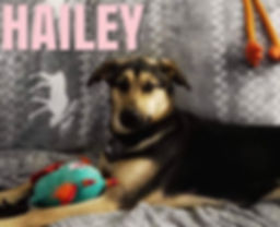 Hailey 2.jpg