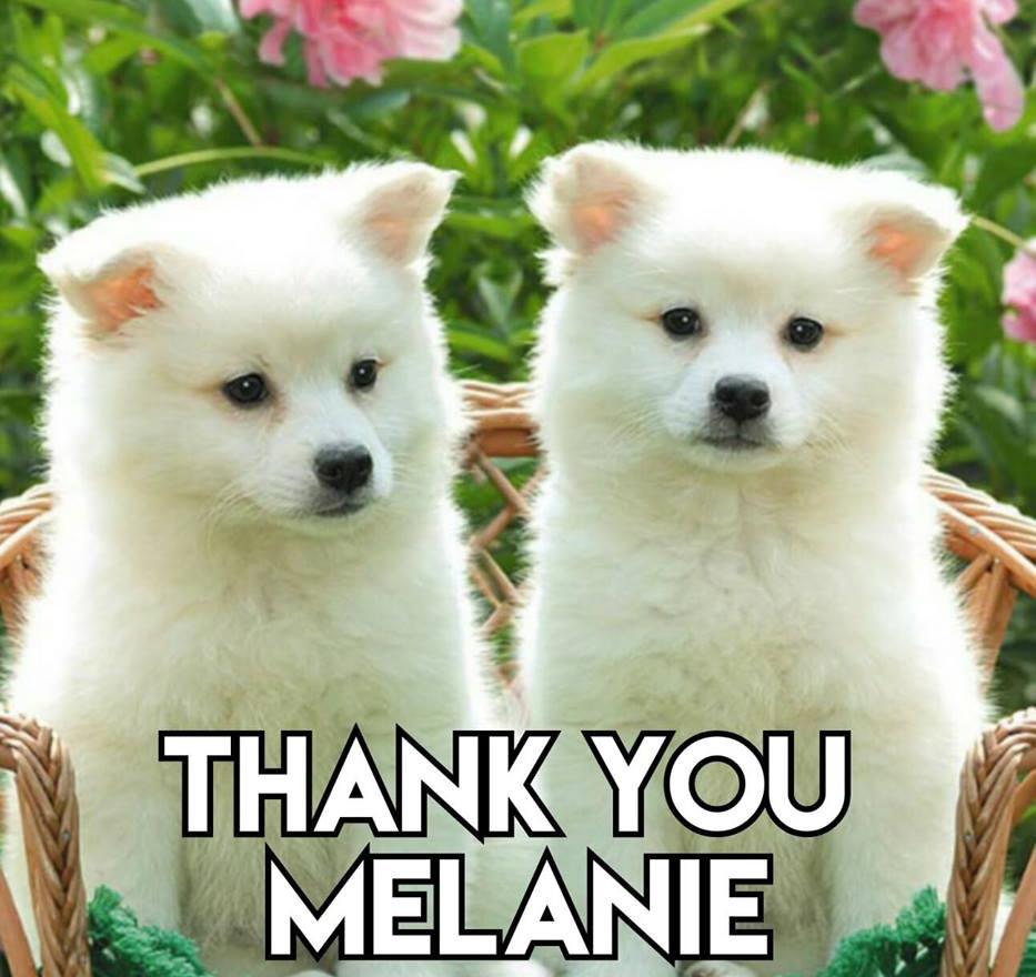 Thank you Melanie