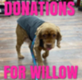 Donations for Willow.jpg