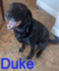 Duke_edited.jpg