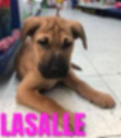 LaSalle 2.jpg