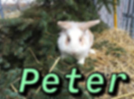Peter 2.jpg