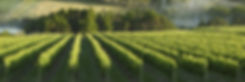 Mornington-peninsula-vineyards_www.visit