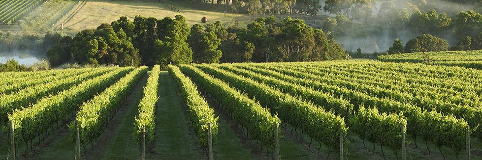 Mornington-peninsula-vineyards_www.visit