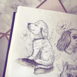 Sketch of a Puppy