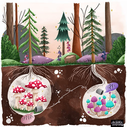 The Secret Lives Of The Forest