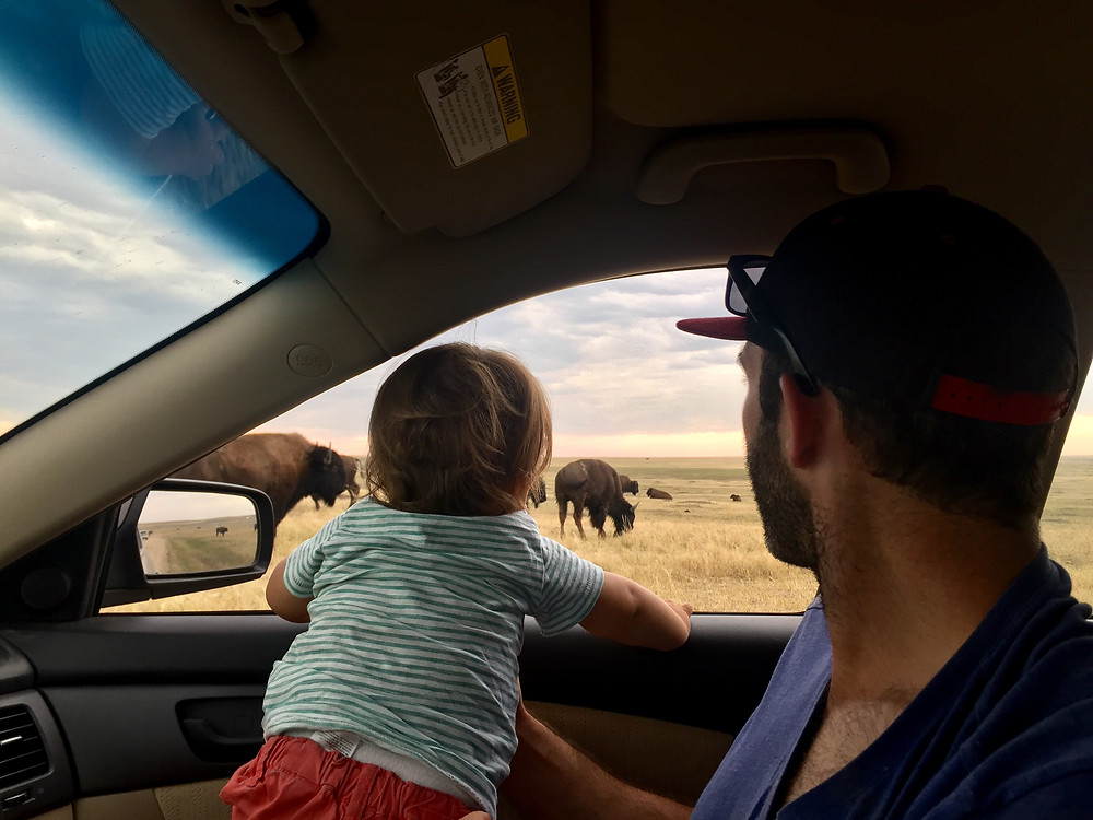 Our toddler Z looking out the window at all the bison in Badlands National Park