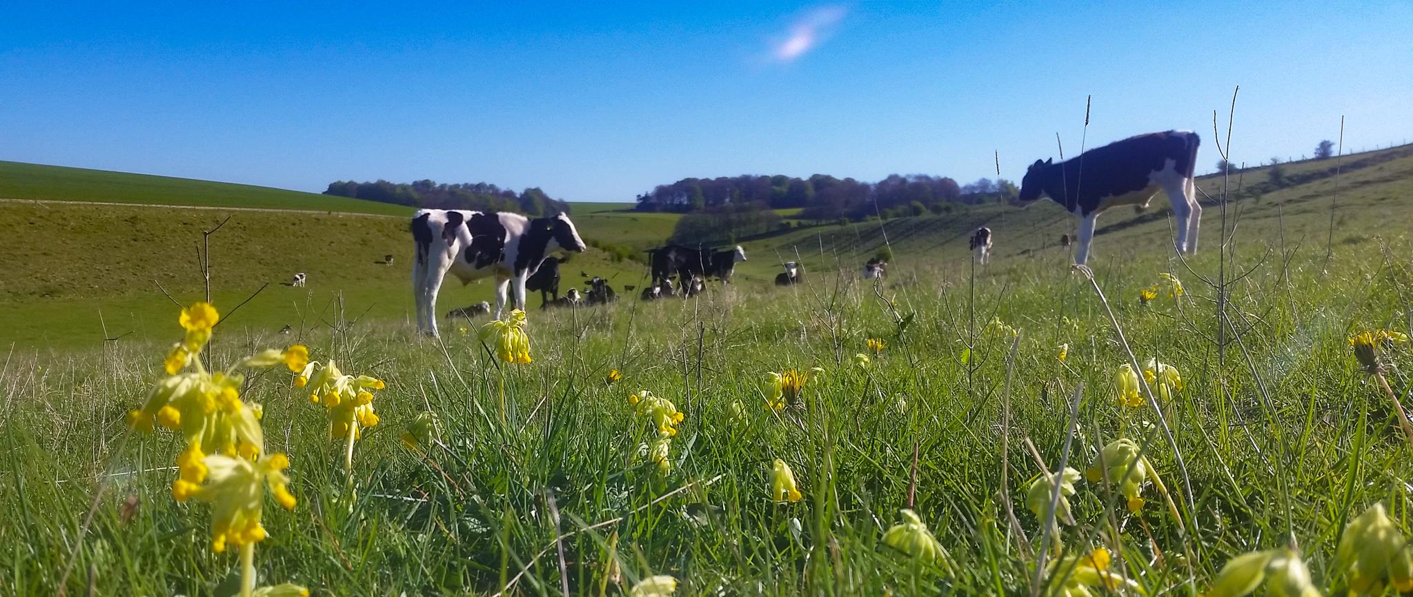 Pasture-fed livestock
