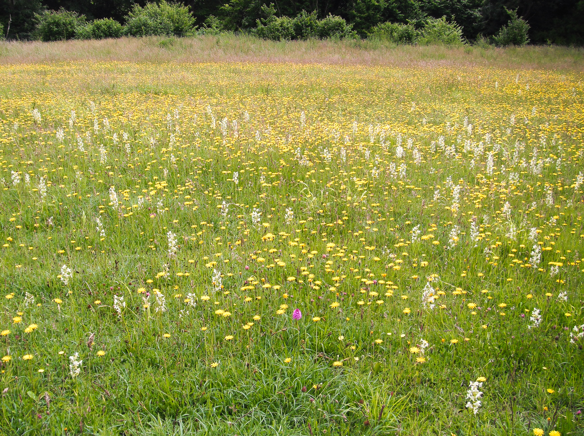 Species rich meadows