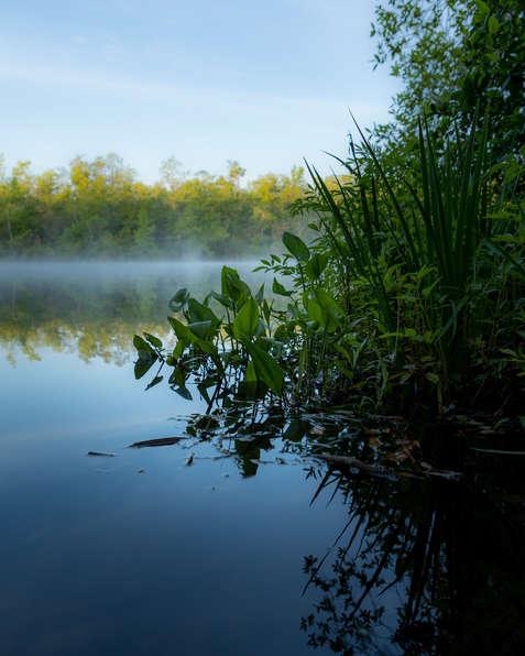 Mornign fog St Mary's River