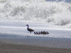 Pacific Ocean Beach, Tennessee Valley