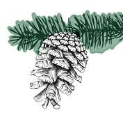 Pine Cone green.jpg