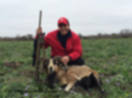 Another successful kill of a sheep at thompson hunting lodge