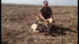 Another successful kill of an exotic sheep