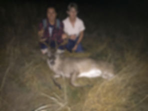 A hunter took down another successful hunt of a hog at Thompson Hunting Lodge, hog hunting, deer hunting.