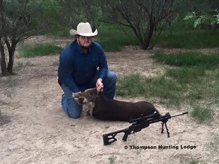 a successful hog kill, at Thompson Hunting Lodge