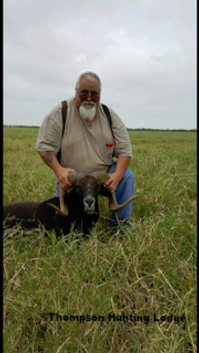 Nice harvested sheep, by Tom Cassell, at thompson hunting lodge