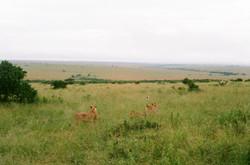 MaasaiMara V