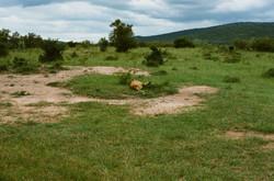 MaasaiMara VIII