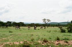 MaasaiMara IV