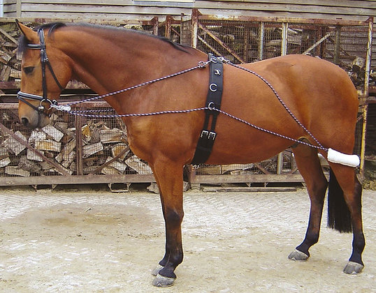 Aparelho Pessoa Harry's Horse