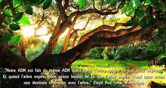 l'arbre respire ce que nous expirons, c'est pourquoi la forêt constitue un puits carbone efficicient