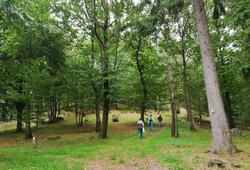 forêt sanctuaire