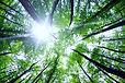l'Association Au-delà des Racines se mobilise pour obtenir des arbres centenaires dans la forêt cimetière