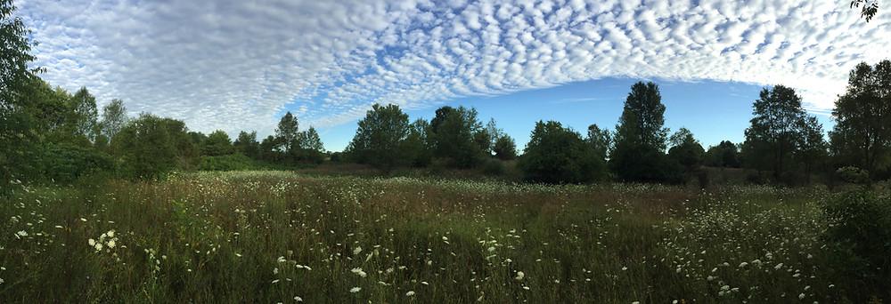 View of Chipman Preserve