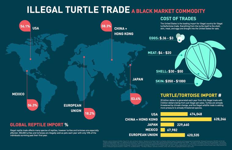 Illegal turtle trade