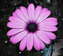 Jason Hayward flower.jpg