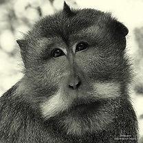 Jason Hayward chimp.jpg
